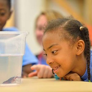Horizons Celebrates a Second Successful Summer of Learning
