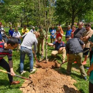 UM Landscape Services and students celebrate Arbor Day with a hands-on tree planting ceremony in the Grove during Green Week 2017. Photo by Robert Jordan/Ole Miss Communications