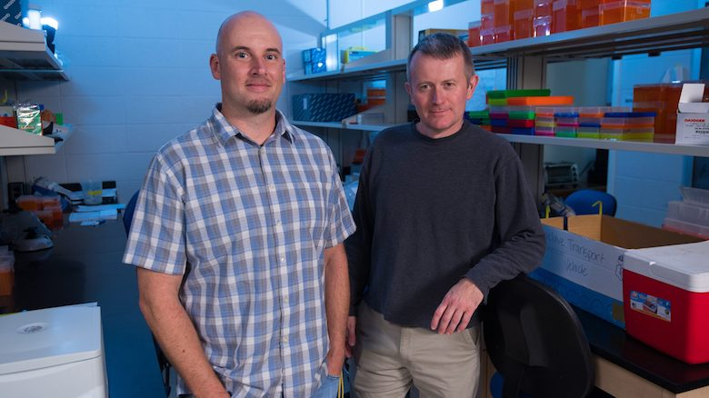 Ryan Garrick (left), UM associate professor of biology, and Colin Jackson, professor of biology and associate chair for graduate studies, are recipients of a National Science Foundation award to explore the Earth's biodiversity. Photo by Kevin Bain